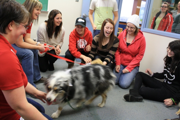 St. John Ambulance Therapy Dogs at Grenfell Campus Library, Corner Brook.